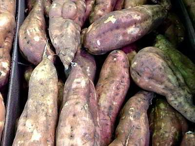 Campana-Batata-Centrimeerca Campaña de batata