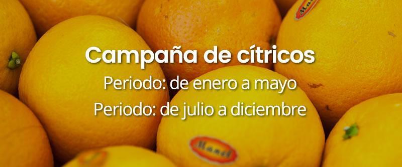 campana-citricos INICIO