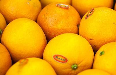 citricos-campañas Citrus Fruits Campaign