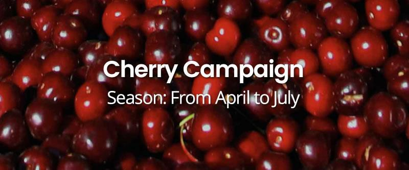Cherry-Campaign HOME