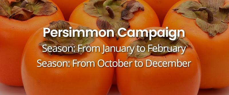 Persimmon-Campaign HOME