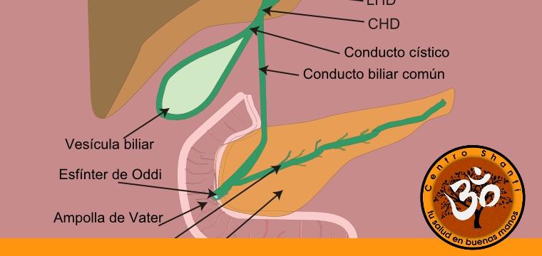 Alimentos para la salud del hígado, páncreas y vesícula biliar [Guía]