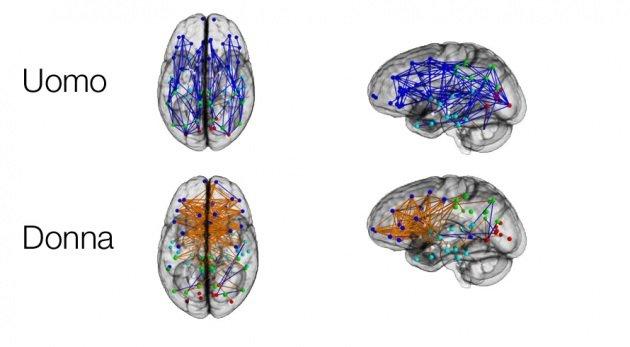 brain.630x360 1