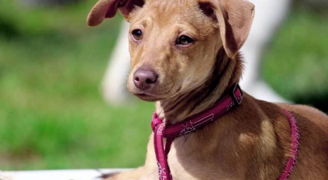 Ya hay más de 65 mil mascotas inscritas en Chile