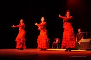 Luna Flamenca Sao Carlos24