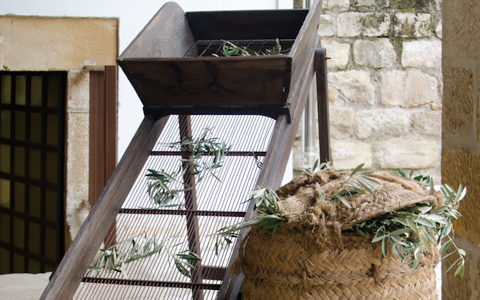 Criba de olivo