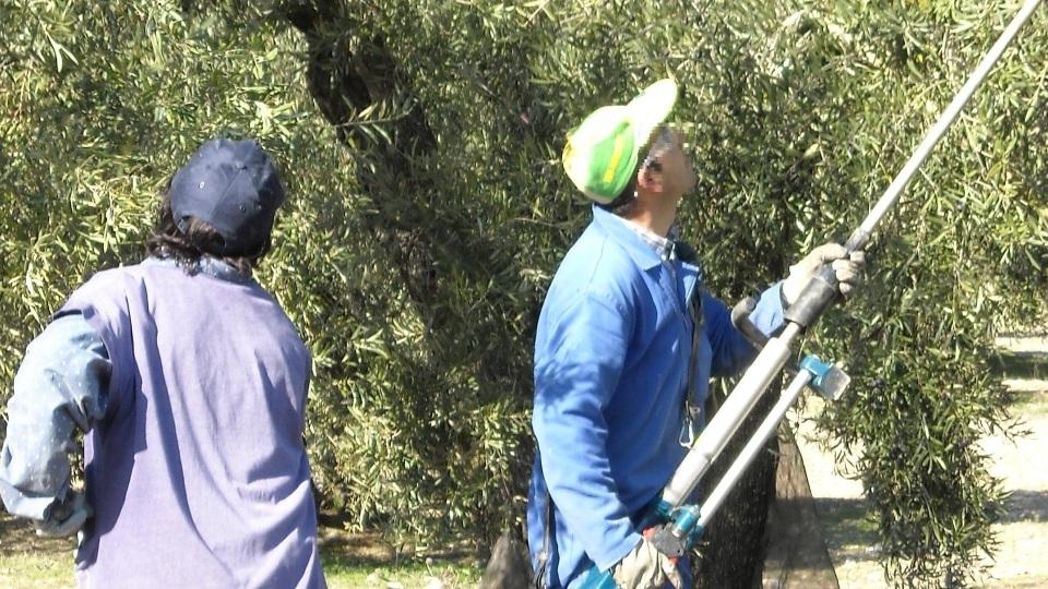 AGRICULTOR Y ALMAZARERO2
