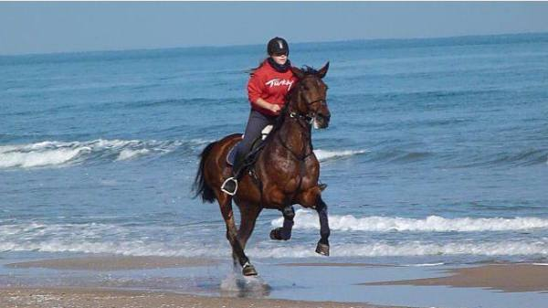 IS THERE ANYTHING BETTER THAN A GALLOP ALONG MILES OF PERFECT BEACH?
