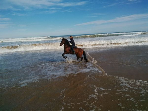 Costa-Blanca-horse-riding-on-the-beach!