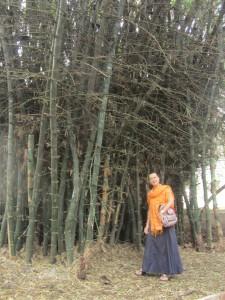 All'ombra dei giganteschi bambou