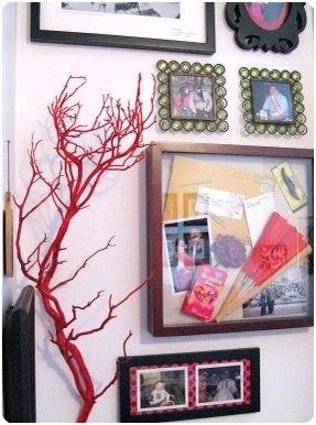 sprout red manzanita