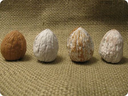 walnuts four stages