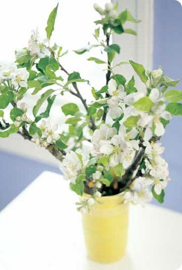 bhg white blooms