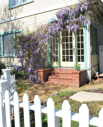 yellow house wisteria