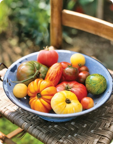 country living tomatoes