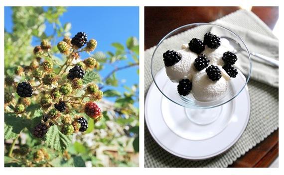 blackberries on ice cream