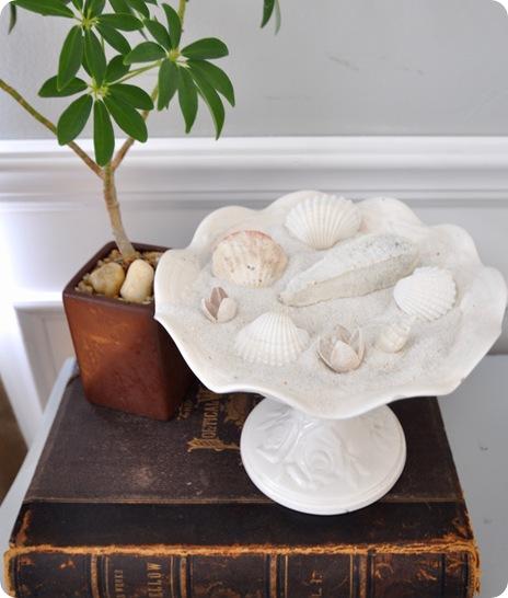 shells on book
