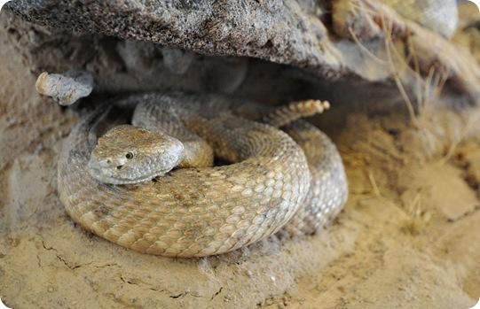 snake up close