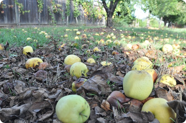 apples on ground with leaves