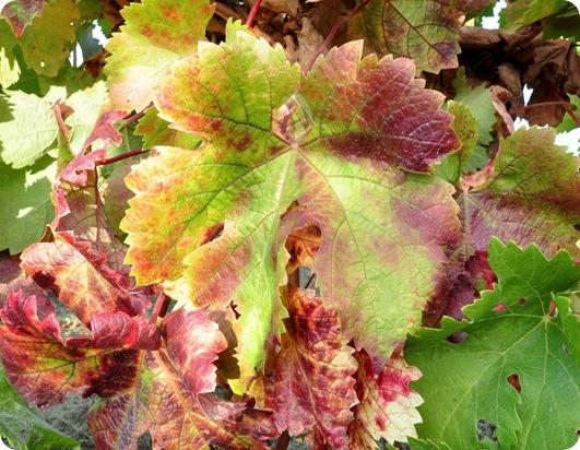 color fall leaf