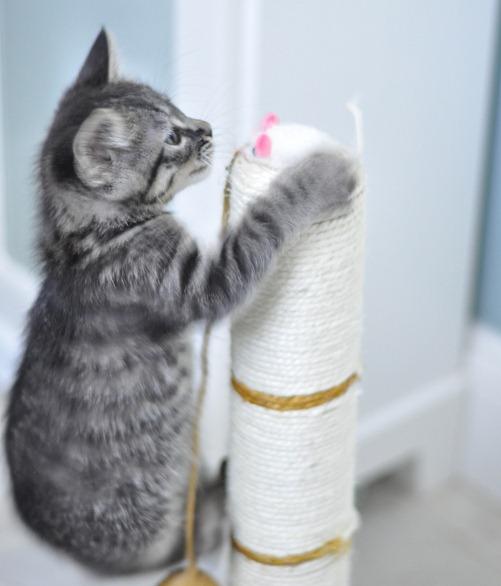 good mouser tabby cat