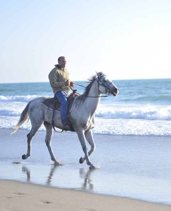 horse and ocean