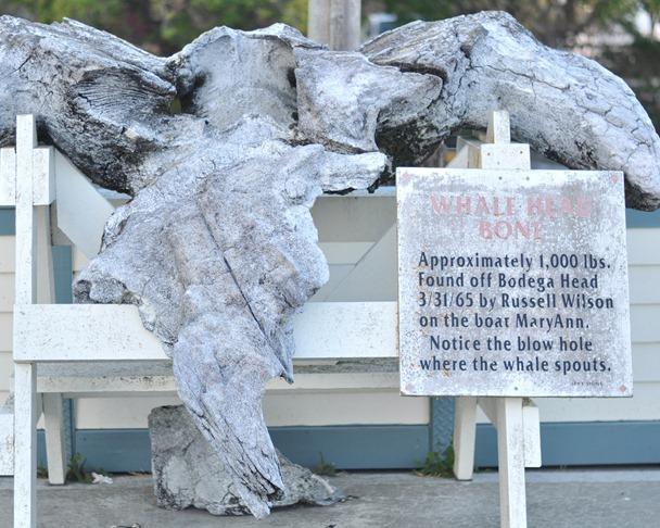 whale head bone 1000 pounds