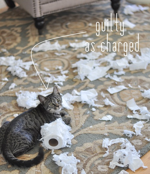 guilty cat