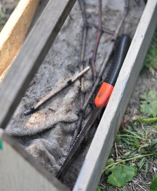 keep vines moist in carpenter box