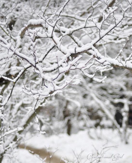 winter branches in yosemite park