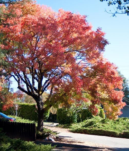 tree autumn day
