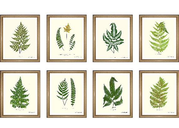fern prints botanical prints shop