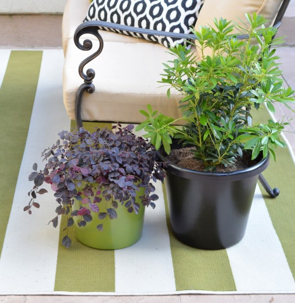 contrast plants