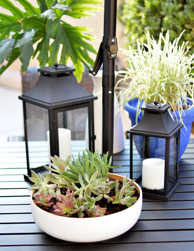 lanterns succulents