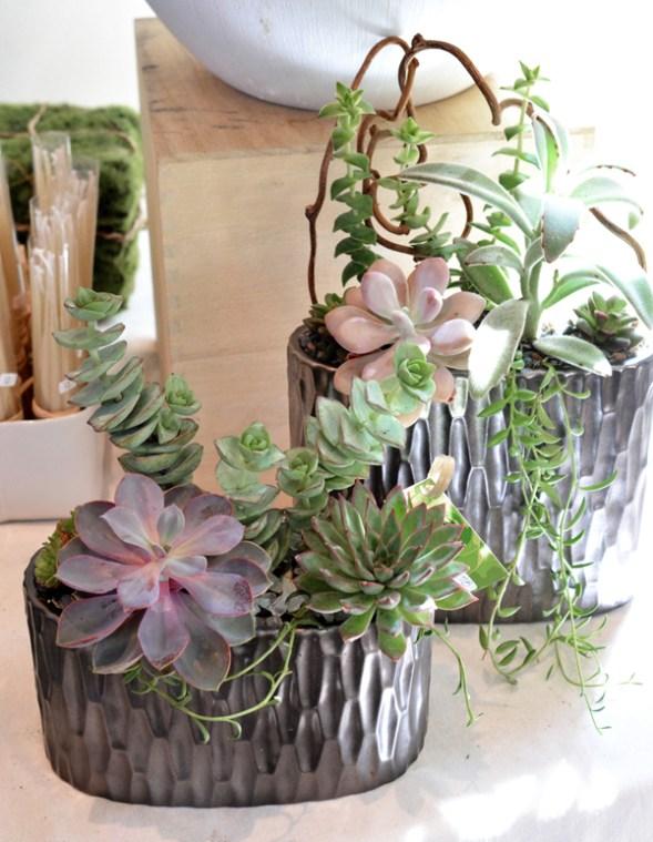 flourish succulents 1