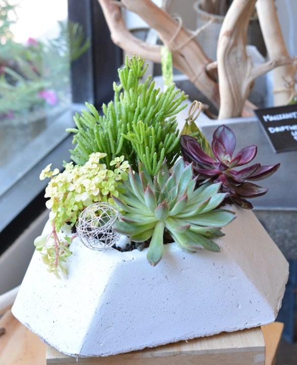 flourish succulents 3