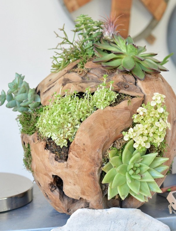 flourish wood ball succulents