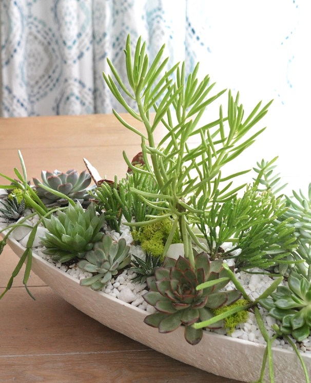 kate boat succulent planter