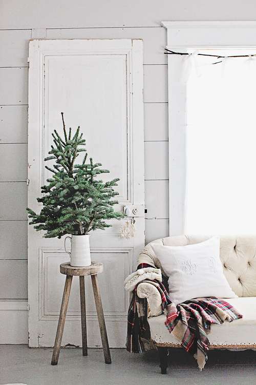 evergreen-tree-in-pitcher
