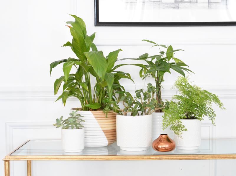 planters slider
