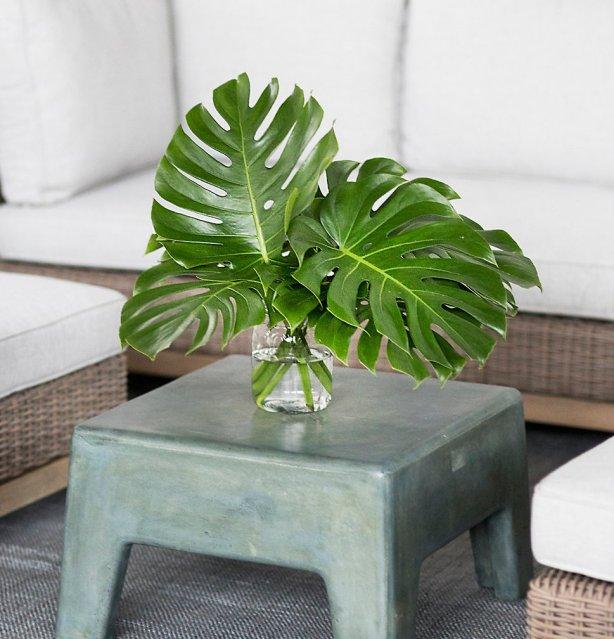 Hip House Plants Centsational Style