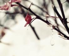 macro-branch-bush-tree-ice-dro-36936