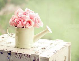 Arrosoir rose, caisse en bois, petit bouquet de roses roses