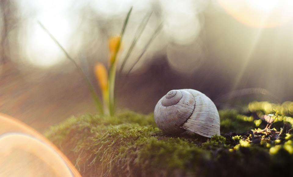 Dix trucs et astuces pour garder sa maison au frais, sans climatisation, de manière économique et écologique ♥ Des trucs simples et un peu de bon sens :)