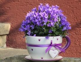 Le bouquet du dimanche #12 un peu de tout, de rien et surtout un petit bouquet à partager en toute amitié pour célébrer le week-end :)