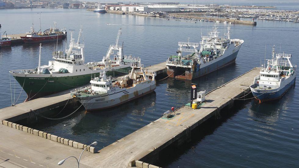 España prohíbe a sus arrastreros faenar en ecosistemas de las Malvinas