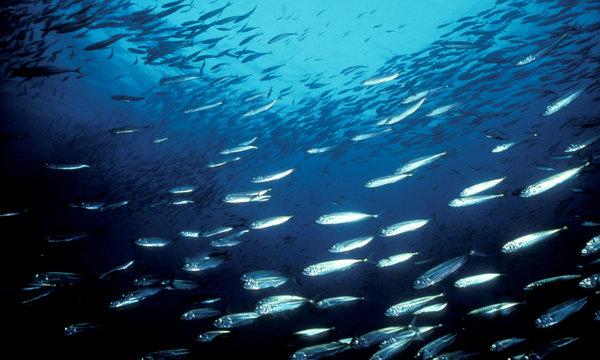 Estudio de UBC predice fuertes pérdidas para la pesca mundial para el año 2050