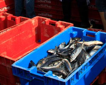 Crecimiento del sector pesquero impulsa la economía peruana