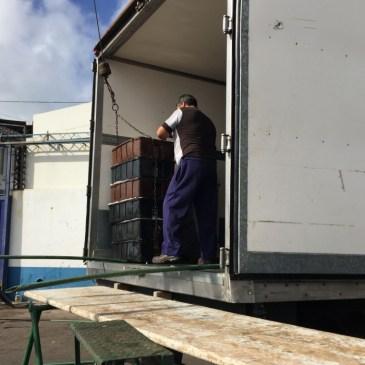 Estabilidad en los desembarques de merluza durante el primer trimestre
