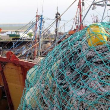 Actualizan vedas de merluza y condrictios en Zona Común de Pesca